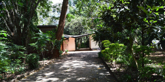 Lavington: Bungalow to Let