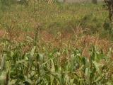 Runda: Prime land for Sale 1 Acre.