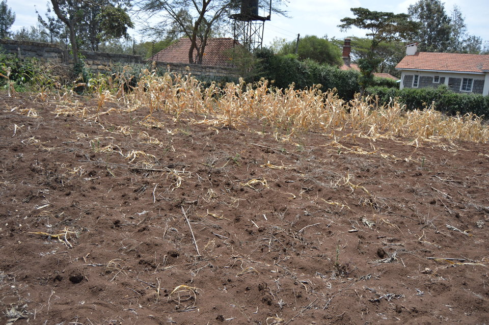 Plot for Sale in Olkeri-Ngong.
