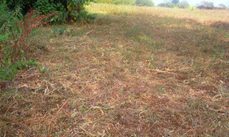Kasarani-Vacant land- For Sale