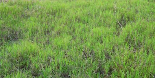 WaiyakiWay Rungiri: 1/4 Acre Plot.