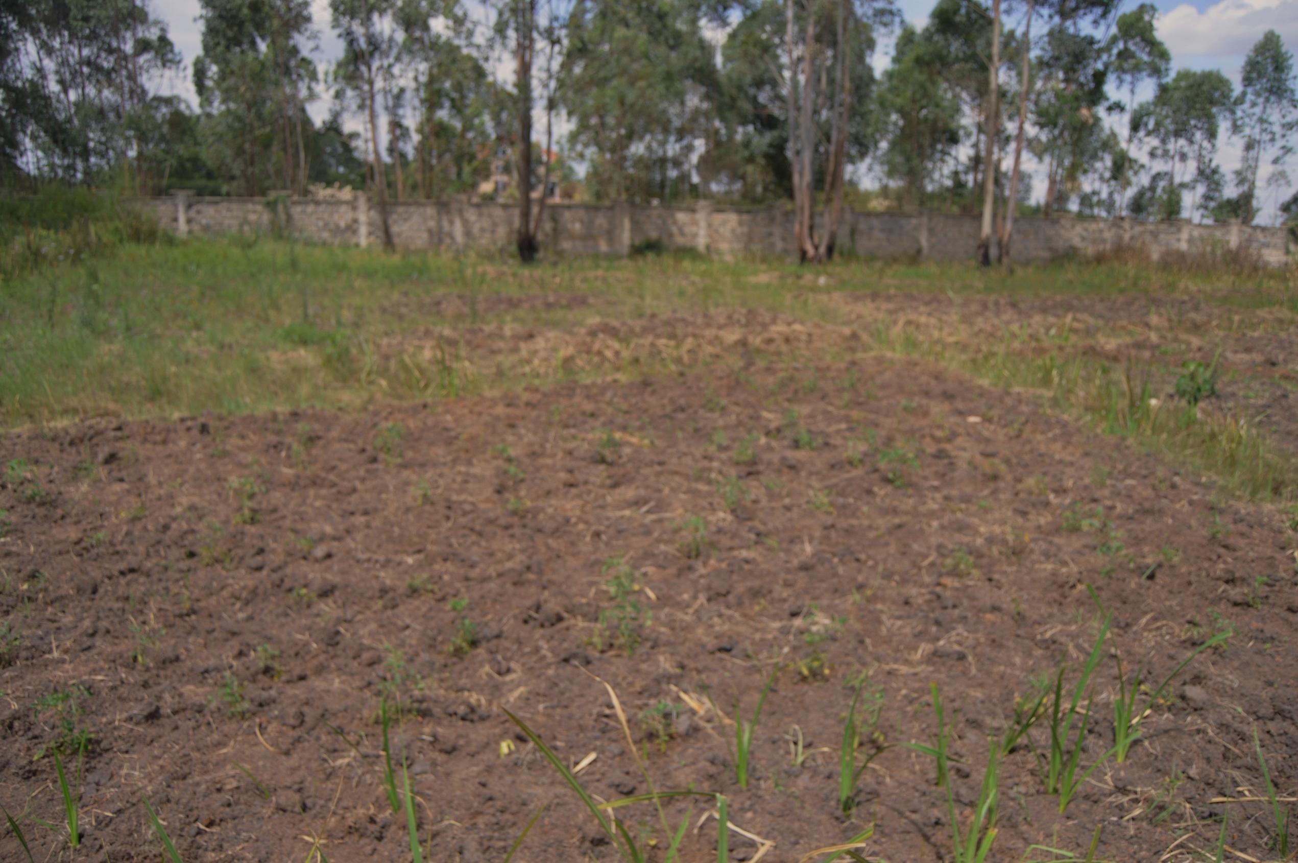 Runda Mumwe: 1/2 Acre Plot.