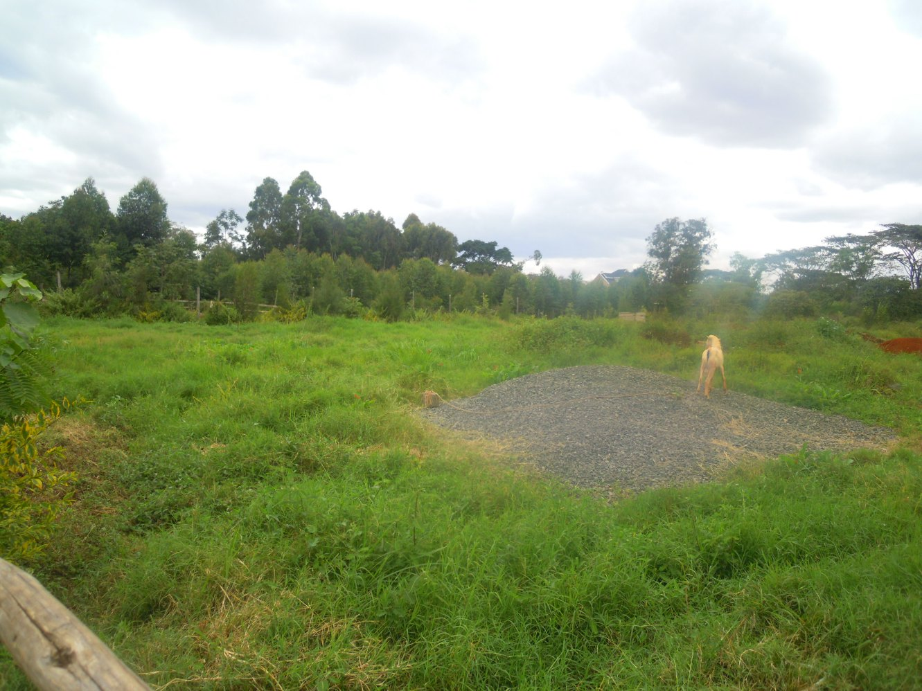 Garden Estate: 1/2 Acre Plot.