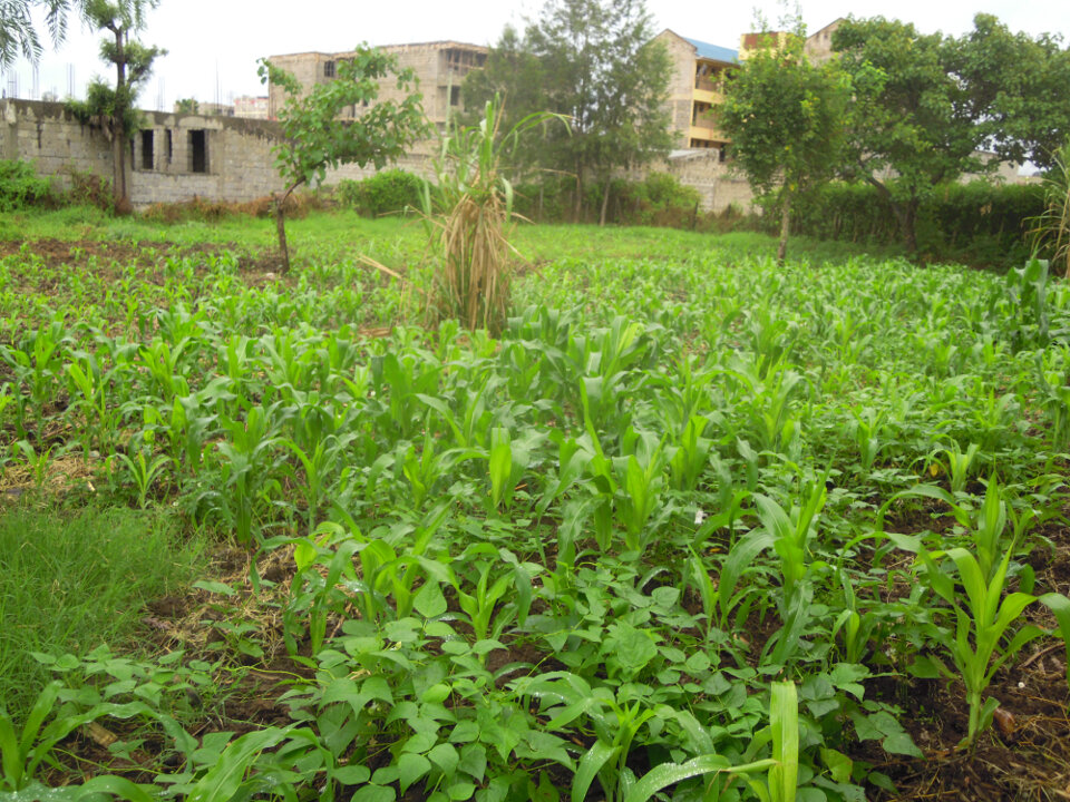 Kahawa West: Plot for Sale.